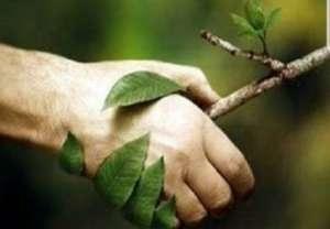 Man holding a tree branch