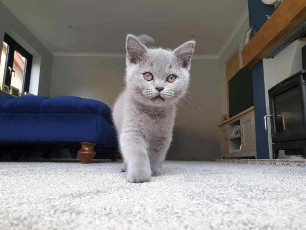 Carpet protection image with kitten